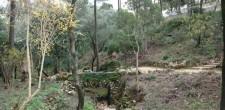 Arborismo