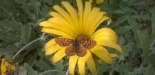 Visita guiada ao borbolet ...