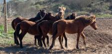 Largada de Cavalos Garranos na Peninha 2021