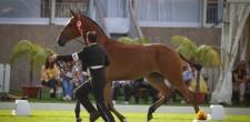 32ª edição Festival Internacional Cavalo Lusitano