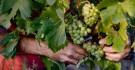 O renascer do histórico vinho ...