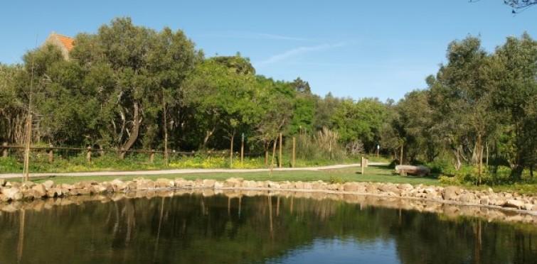 Espaços Verdes | Bosque dos Gaios