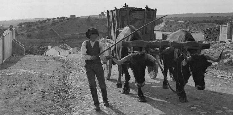Camponês com carro de bois, c. 1900 | Caparide