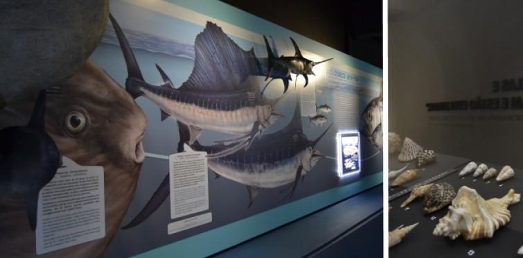 Resultado de imagen de museu do mar cascais