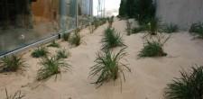 Recriação de duna à entrada do CIAPS