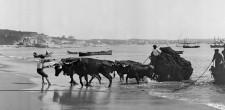 Bois puxando carro com redes, c. 1900 | Cascais
