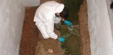 Aplicação de biocida em colonização de micro-organismos nas ruínas arqueológicas de habitação do século XVI